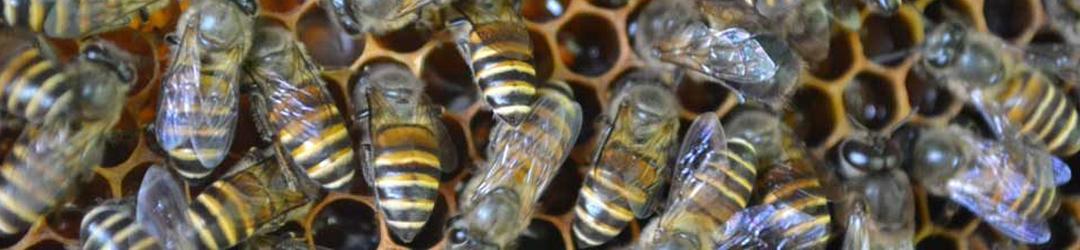 Pollinators Network