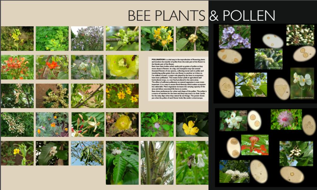 bee plants and pollen